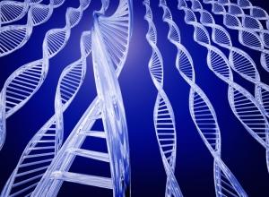 suicide-genes-l